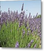 Lavender And The Bee Metal Print