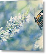 Lavender And The Butterfly Metal Print