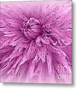 Lavender Beauty Metal Print
