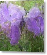 Lavender Blue Iris Garden Metal Print