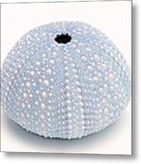 Blue Sea Urchin White Metal Print