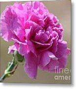 Lavender Carnation Metal Print