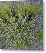 Lavender Explosion Metal Print by Tim Gainey