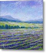 Lavender Field In Provence Metal Print