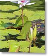 Lavender Flower On A Pond Metal Print