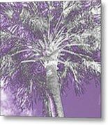 Lavender Glow Palm Tree Myakka River State Park Usa Metal Print