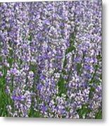 Lavender Hues Metal Print