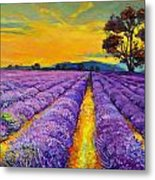 Lavender Metal Print by Ivailo Nikolov