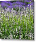 Lavender Layers Metal Print