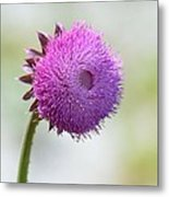 Lavender Perfection Metal Print