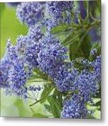 Lavender Pompoms Metal Print