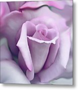 Lavender Rose Flower Portrait Metal Print