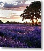 Lavender Sunset Metal Print by Cole Black