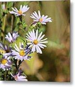Lavender Wild Flowers Metal Print by Edward Hamilton