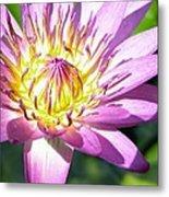 Lavillita Flower 10117 Metal Print
