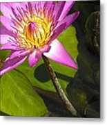 Lavillita_flower 10116 Metal Print