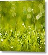 Lawn Twinklers Metal Print