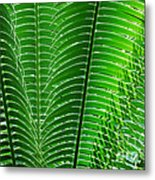 Layered Ferns I Metal Print