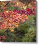 Layers Of Autumn Red Metal Print