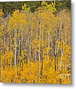 Layers Of Gold Metal Print