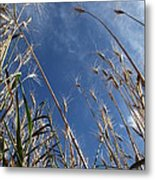 Laying In A Feild Looking Up Metal Print