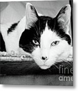 Le Cat Metal Print by Andee Design