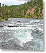 Le Hardy Rapids In Yellowstone River In Yellowstone National Park-wyoming   Metal Print