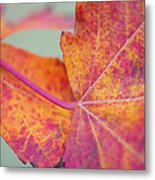 Leaf Abstract In Pink Metal Print