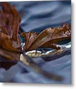 Leaf Afloat Metal Print by Nancy Edwards