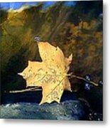Leaf Afloat Metal Print