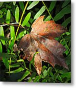 Leaf Among Ferns Metal Print