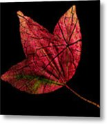 Leaf And Tree Metal Print