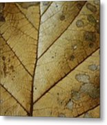 abstract Leaf Metal Print