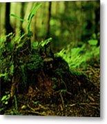 Leaf Bud Metal Print
