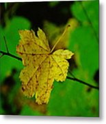 Leaf Caught On A Branch Metal Print
