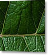 Leaf Close Up Metal Print