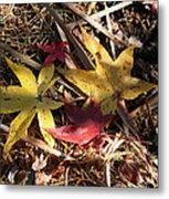 Leaf Collage Metal Print