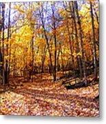 Leaf Covered Trail Metal Print