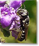 Leaf Cutter Bee Metal Print