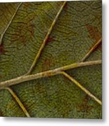 Leaf Design II Metal Print