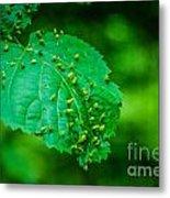 Leaf Gall Metal Print