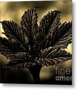 Leaf In A Special Light Metal Print