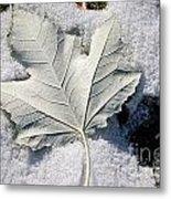 Leaf In Snow Metal Print