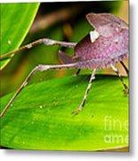 Leaf Katydid Metal Print