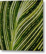 Leaf Lines Metal Print