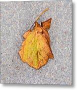 Leaf On Granite 4 - Square Metal Print