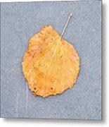 Leaf On Granite 9 - Square Metal Print