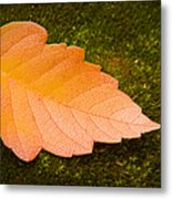 Leaf On Moss Metal Print by Adam Romanowicz