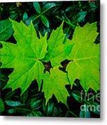 Leaf Overlay Metal Print