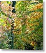Leaf Path  Metal Print